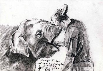 Tierpfleger mit jungem Elefanten Zoo Berlin
