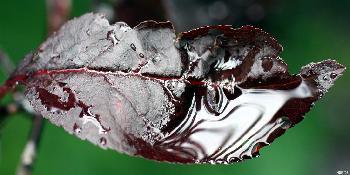 artos: Wenn die Blätter Trauer tragen