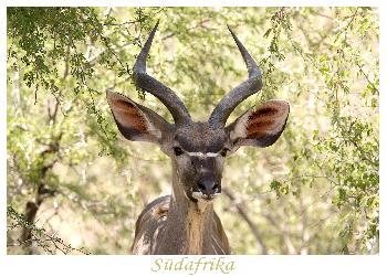 Sieht Kudu was, was ich nicht seh?