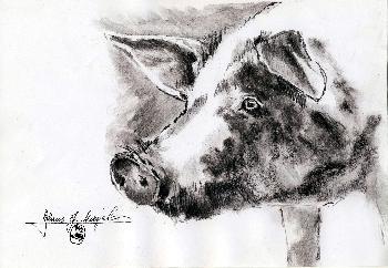 Hausschwein Portrait