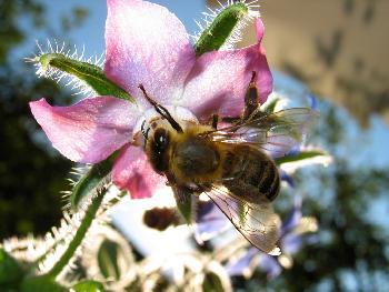 Eine Flotte Biene
