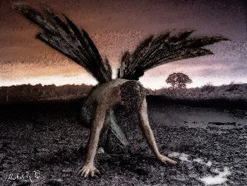 Africola: Fallen Angel