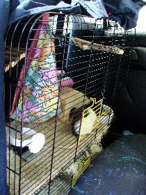 Und so wurden wir im Auto transportiert