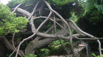Geometrie der Natur
