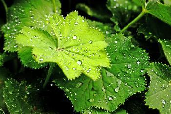 jeder Regentropfen trägt auch die Möglichkeit eines Regenbogens in sich