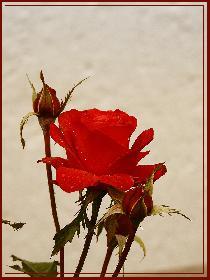Blazing Red | 4.11.08