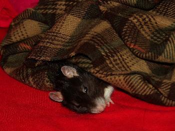 So lag Broscha öfter unter dem Schal. Unter ihm starb sie auch.