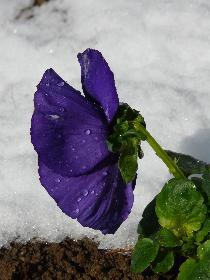 Frühling in Deutschland | 24.03. 09
