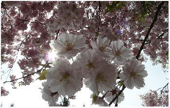 Springtime ...
