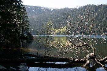 Schwarzsee im  Frühling 2009