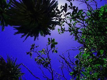 Mittagspause unter Palmen (bessere Bildqualität)