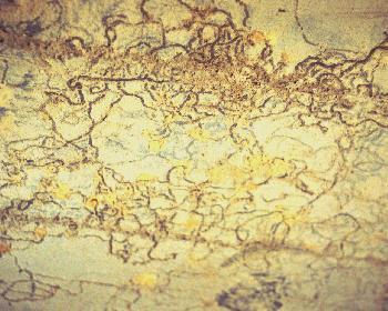 Geheimnisvolle Wege Spuren von Würmern, Käfern oder Maden in