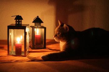 Katzenromantik Part3 (Digga)