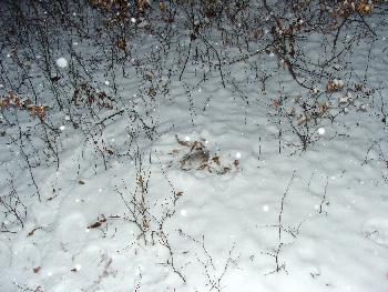 Broschas Steinchen im warmen Schneebettchen (Winter 2009) 2