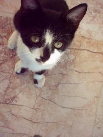 owlet: Kätzchen in der Türkei