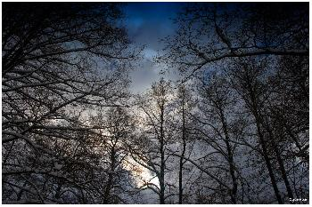 Farbenspiel im Winterwald