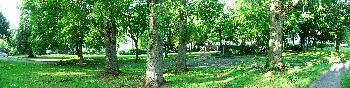 Sturmschäden an Bäumen nach hurricane-artigem Gewitter am 10.06.10