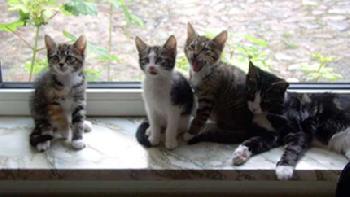 tja.. cats halt