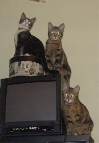 3 von 5 katzen die ich hatte