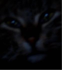 Kleopatra in der Nacht