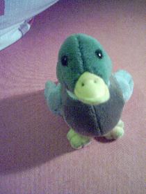 Entchen mit Quack-Geräusch