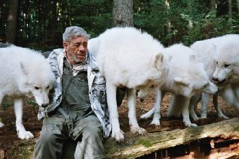 Werwoelfin: Wolf unter Wölfen