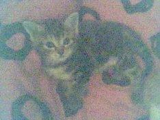 Westbam s kleine muschi :) die Kleopatra, sie wird noch ne reise vor sich haben :D