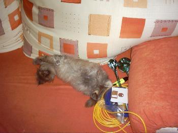 Katzenbesuch 1 - so kann sich eine Katze ausruhen