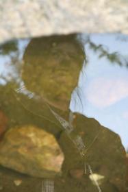Wasserspiegelung 2